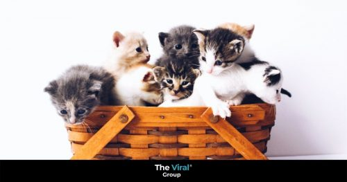 Cats in a basket on Cat Day 2020