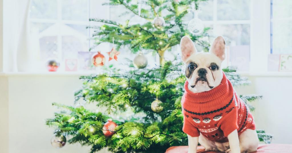 festive jumper dog